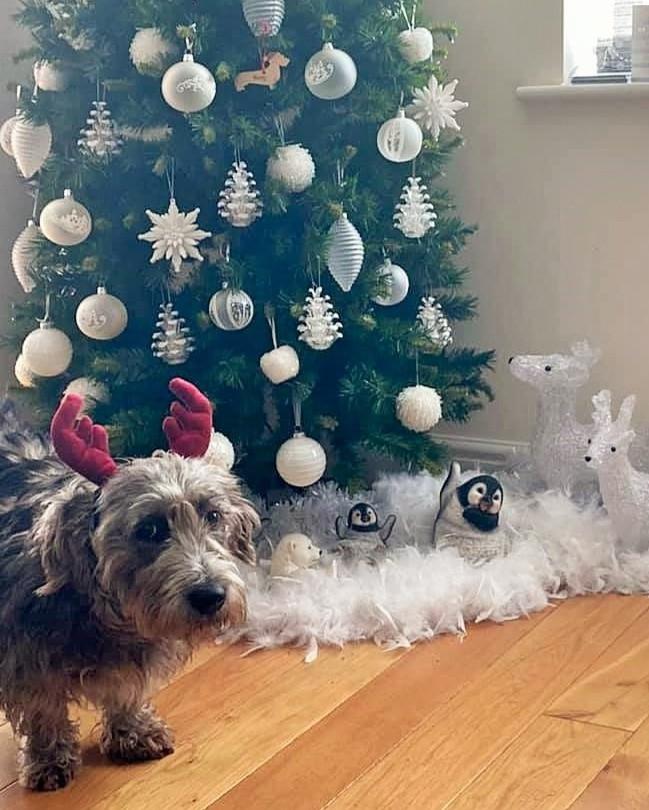 Christmas Buster 🎅