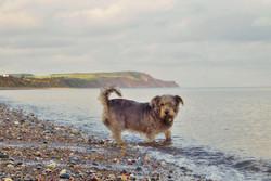 IRISH DOG - IRISH SEA