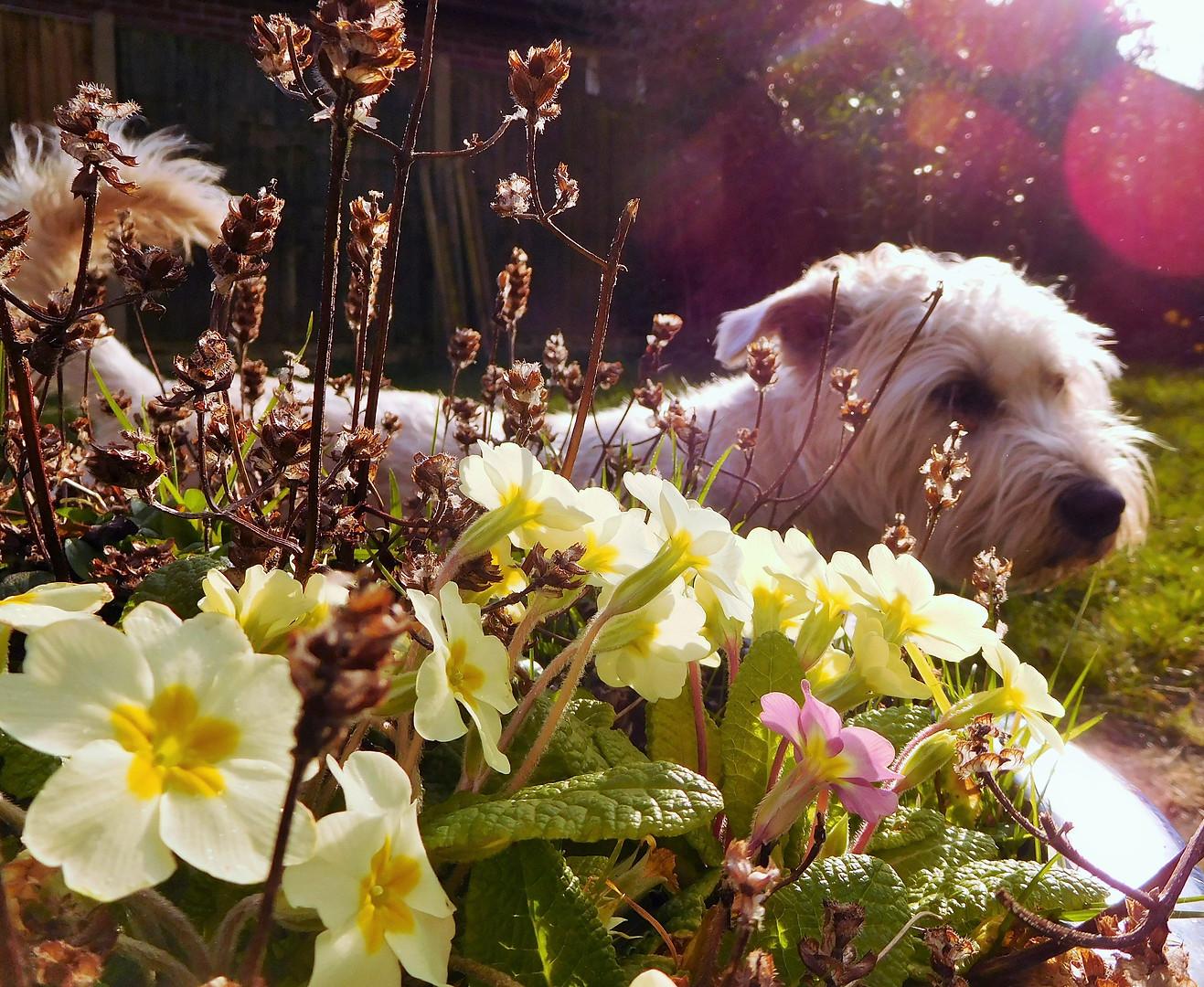 Spring Flowers 🌸🌼