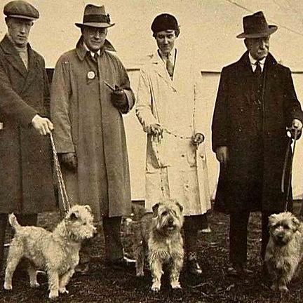 Glen of Imaal Terriers in the 1930s | Ireland