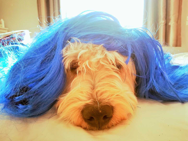 Hair Bear!