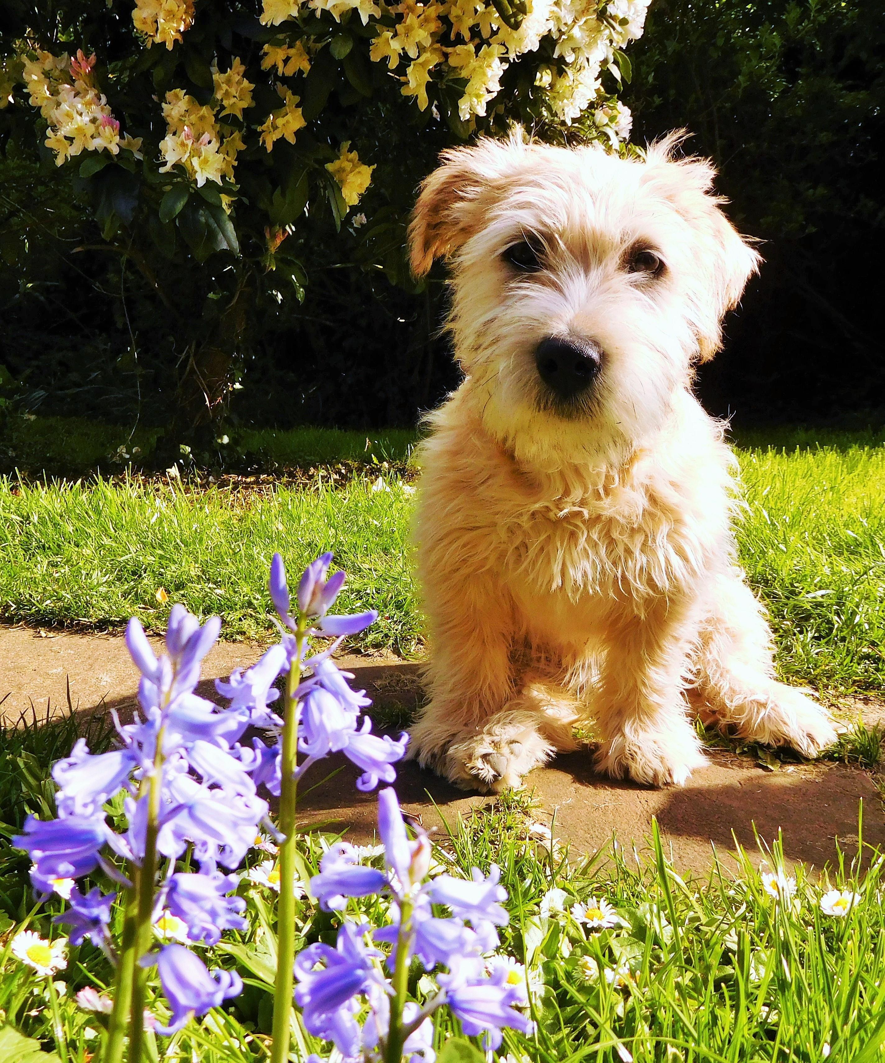 A NETTLE AMONG FLOWERS
