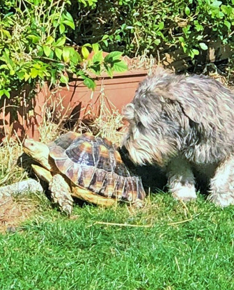 The Bear and The Tortoise 🐢