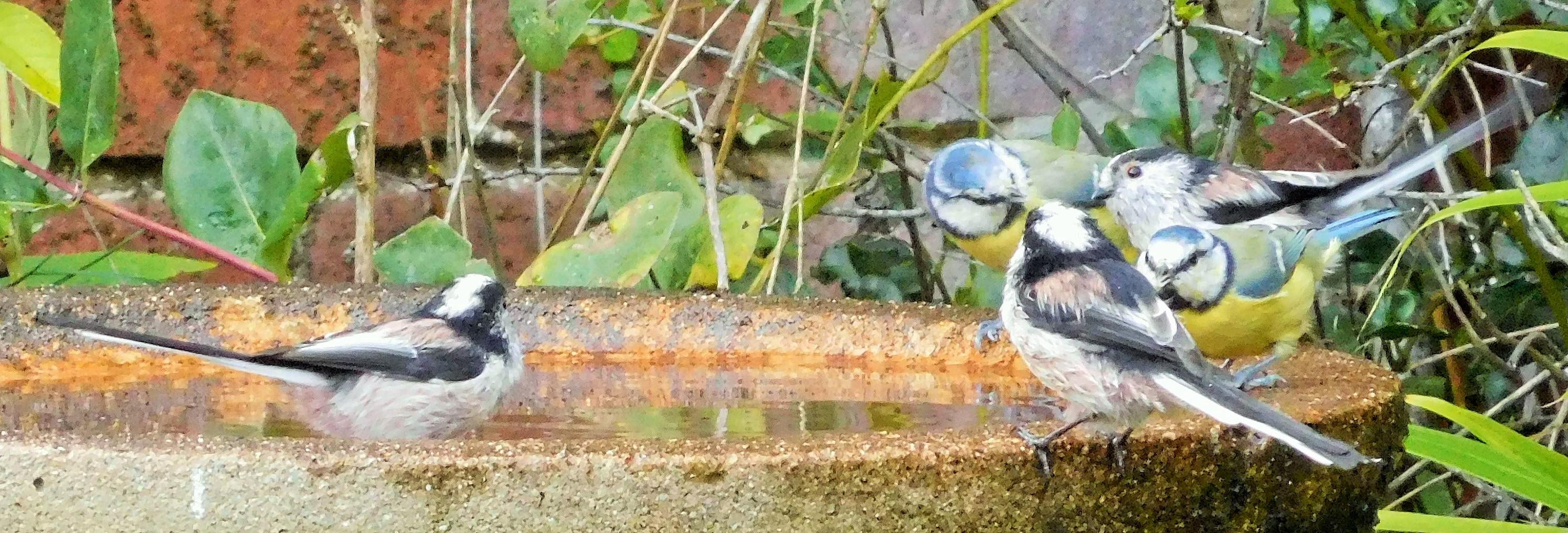 Bird Bath 🌾🐦🌿