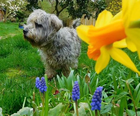Spring Colour 🌼🌿