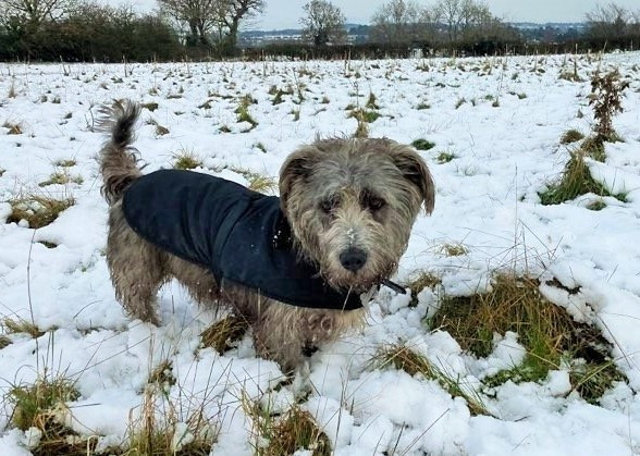 Winter Coat 🐾❄