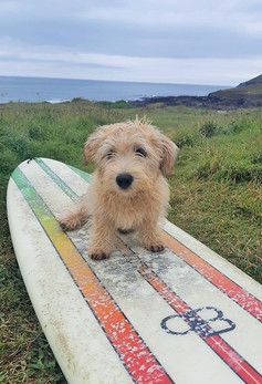 Surfer Dude 😎