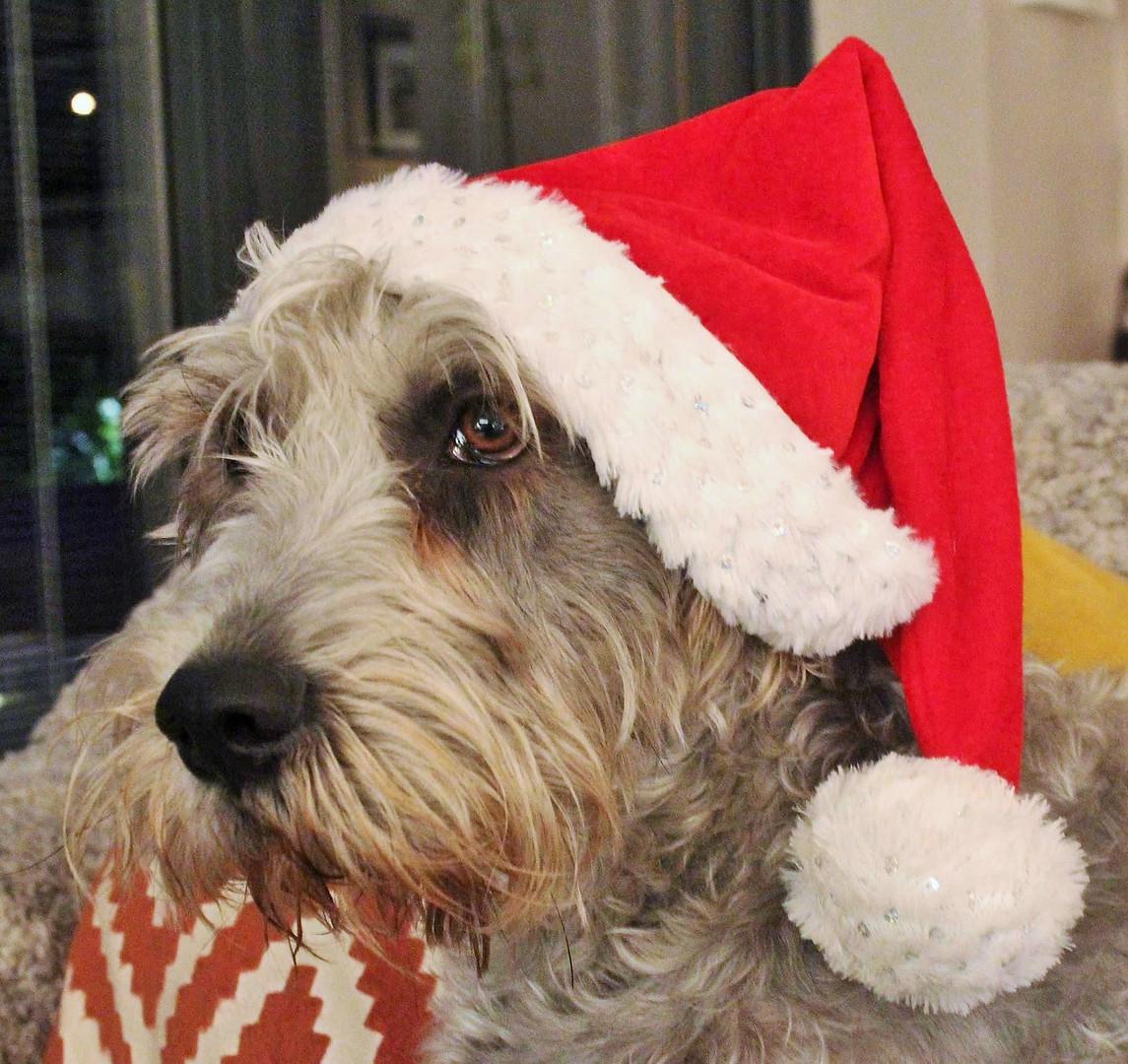 Christmas Teagan 🎅