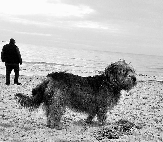 ©Jo Capon 2017 | Sky the Glen of Imaal terrier | www.teamhrach.com
