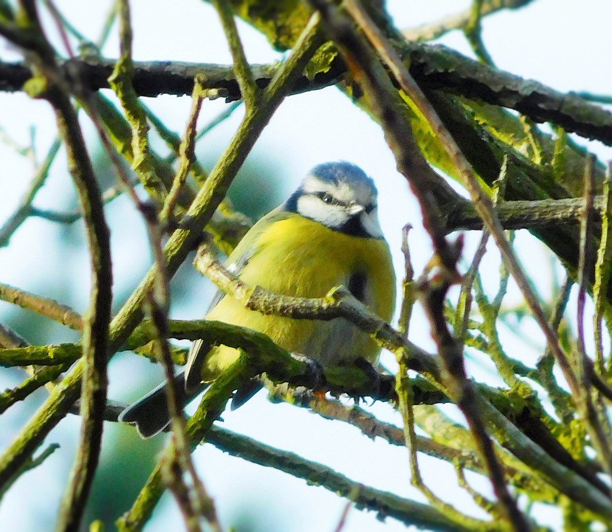 Bird's Eye View 🌿