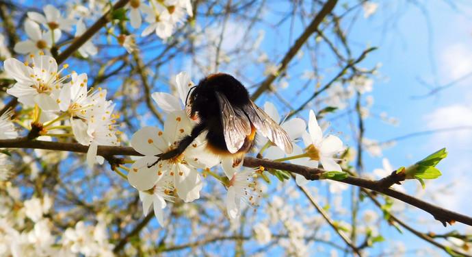 Spring Blossom 🌸🐝
