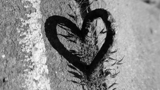 Wholehearted ❤