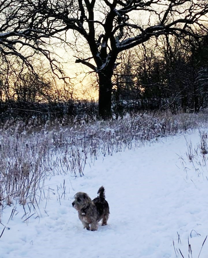 Buster ❄🐾💙