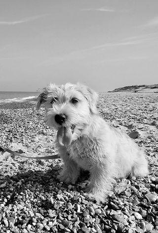 Clodagh's First Beach Walk⚓⛵May 2018 | www.teamhrach.com