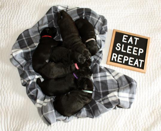 EatSleepRepeat.jpg