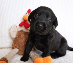 Puppy Turkey.jpg