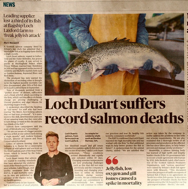 Loch Duart salmon deaths.jpeg