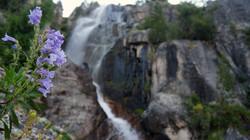 Flowers n falls
