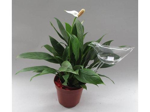 תכשיט ציפור או פרח זכוכית לעציצים