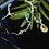Thumbnail: BRENDA Classic Teardrop Swarovski Aurora Borealis Crystal Bracelet & Necklace