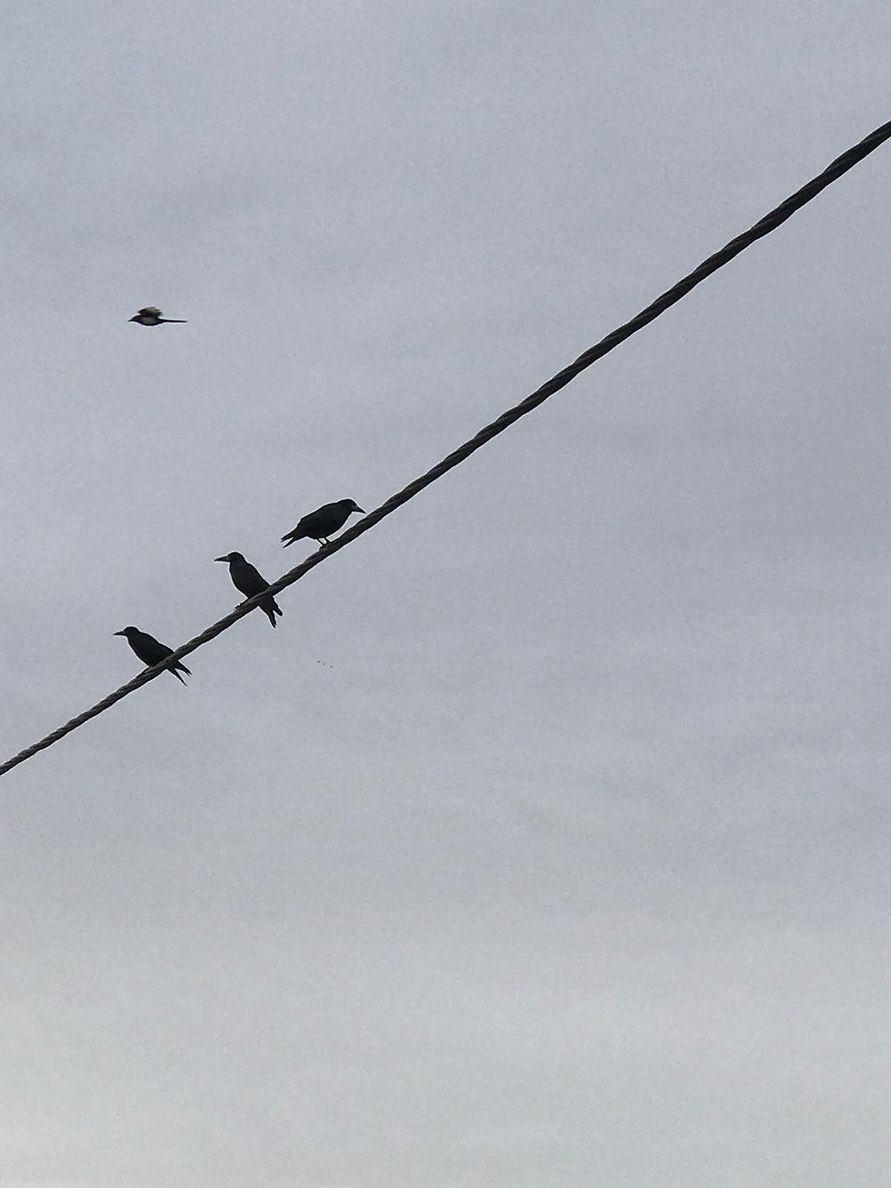 Οι ενδορφίνες πετάνε σαν τα πουλιά.