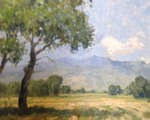 Hay Meadows