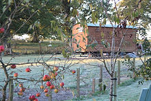 Poachers-Hut-Apples-1.jpg