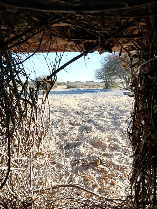 hunting hide with sure sight, Garmin Xero, Automatic Bow Sight, Bow Hunting, Hunting, Archery, Shooting, target distances, aim, shot, sight tapes