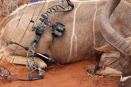 Liana Koedoe.jpg Sure Sight automatic bow sight, #bestbowsight better than garmin,Garmin Xero, Automatic Bow Sight, Bow Hunting, Hunting, Archery, Shooting, target distances, aim, shot, sight tapes