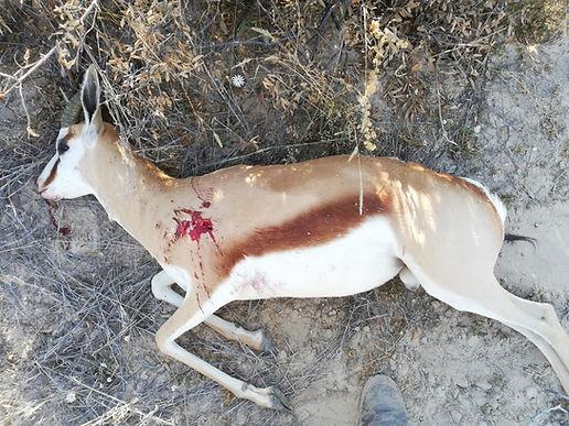 Springbok hunt, Garmin Xero, Automatic Bow Sight, Bow Hunting, Hunting, Archery, Shooting, target distances, aim, shot, sight tapes