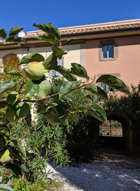 Fruit trees at the Villa
