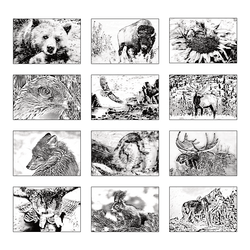 ColoringDeck Western Wildlife