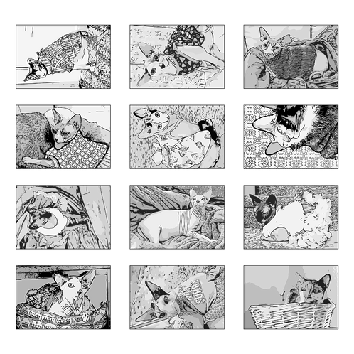 ColoringDeck Shady Cats