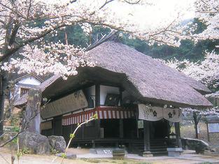 観龍寺の桜