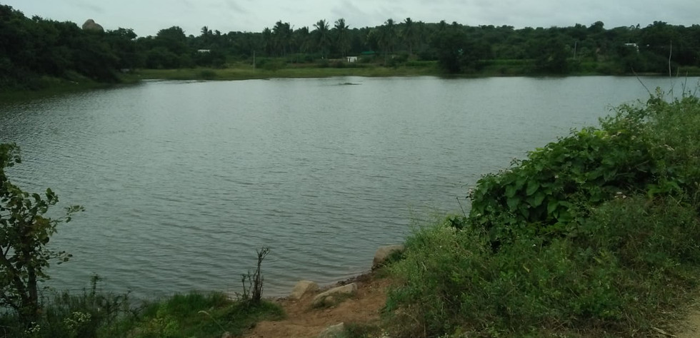 The Lake adjacent to our Forestry project location