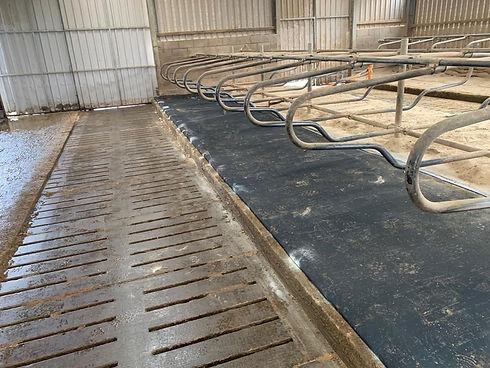 DuraLay Cow Mattress Installation.jpg