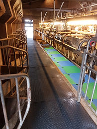 Matting in milking parlour and pit