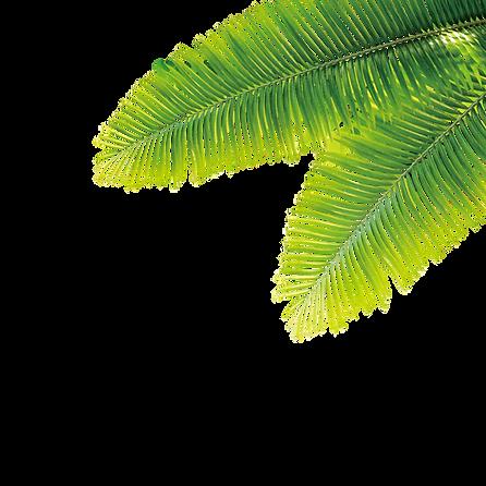 kisspng-tropics-plant-computer-file-trop