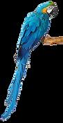 kisspng-budgerigar-parrot-macaw-lovebird