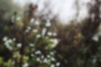 Fotografie, Natur, Frankfurt, Nebel, Herbst, Blumen, Spinnennetz