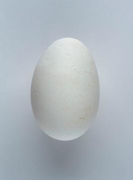 Fleischmann Dirk, 162 out of Two Billion Eggs, 2016