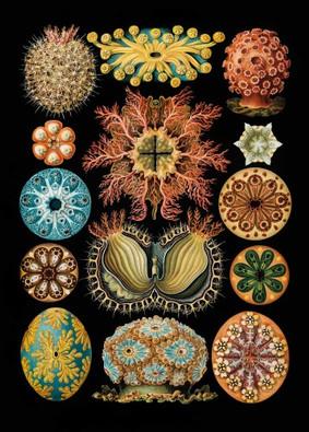 Haeckel Ernst, Kunstformen der Natur, 1904