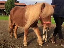 asino felice - pony recupero - farfui