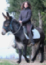Asino Felice Trekking con gli asinistallone Lisa Mabilia piemonte canavese pantesco pantelleria horus