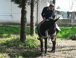 addestramento etologico asini felice doma corso equiturismo someggiato