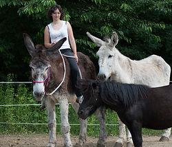 Asino Felice Trekking con gli asini Lisa Mabilia piemonte canavese