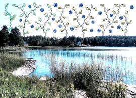 Where blueberries never die