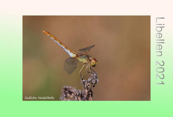 Libellen Kalender 2021