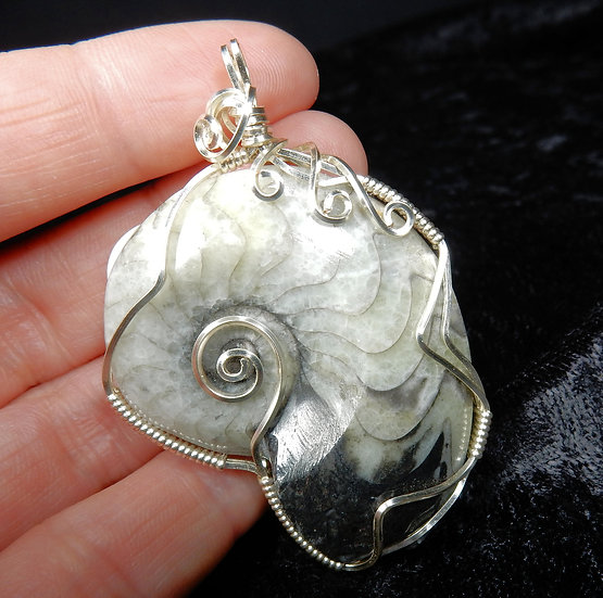 gray and white ammonite main view