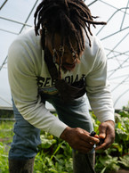 Paul is capping off the end of a drip tape in a hoop house at D-Town Farm, Detroit, 2019.